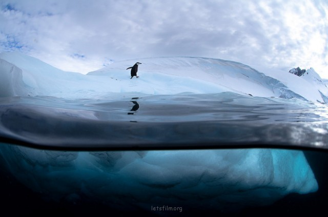 Antarctic-Wildlife-by-Justin-Hofman-10-640x423