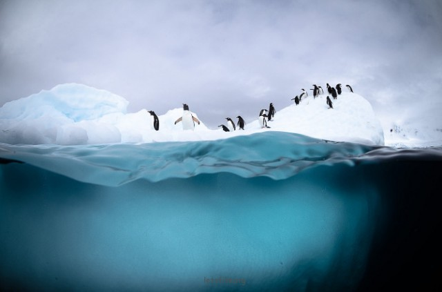 Antarctic-Wildlife-by-Justin-Hofman-4-640x423