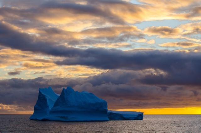 Antarctic-Wildlife-by-Justin-Hofman-8-640x423
