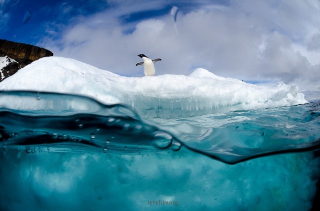 Antarctic-Wildlife-by-Justin-Hofman-9-640x423
