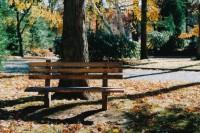 投稿作品No.746 波士顿的秋天