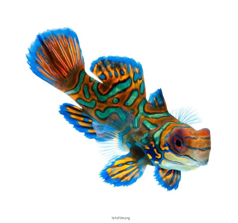 ffa575b4f1_fish09