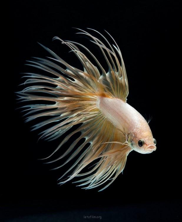 ffa575b4f1_fish11