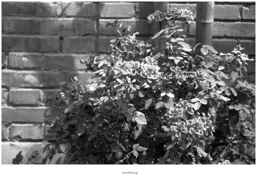 投稿作品No.645 北方的黑白色世界 | 胶片的味道