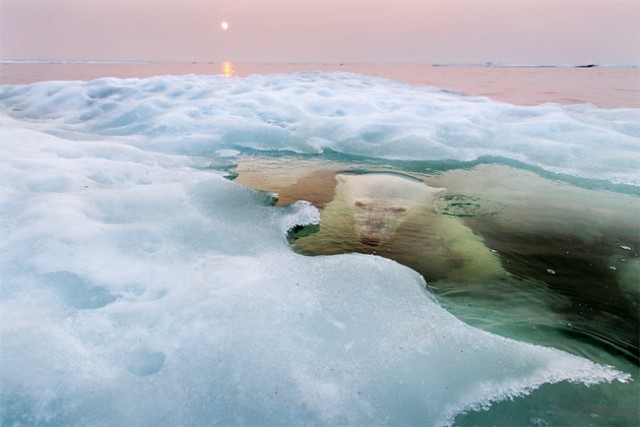 自然组冠军 'Grand-Prize Winner' and 'Nature Winner'. Hudson Bay, Manitoba, Canada. (by Paul Souders)