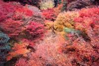 京都·東福寺、伏見稻荷
