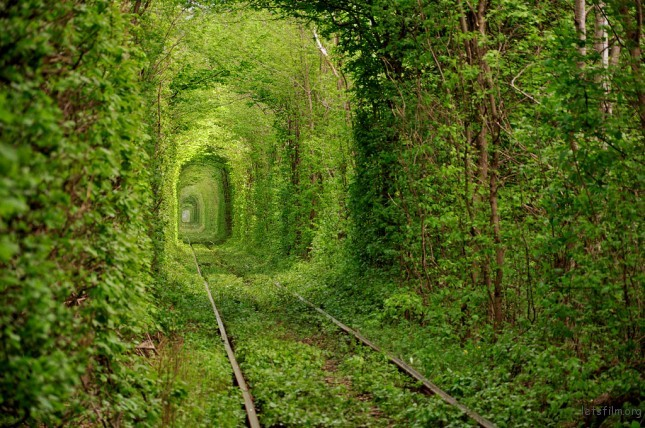 (1) Tunnel of Love - 乌克兰 Photo by Oleg Gordienko