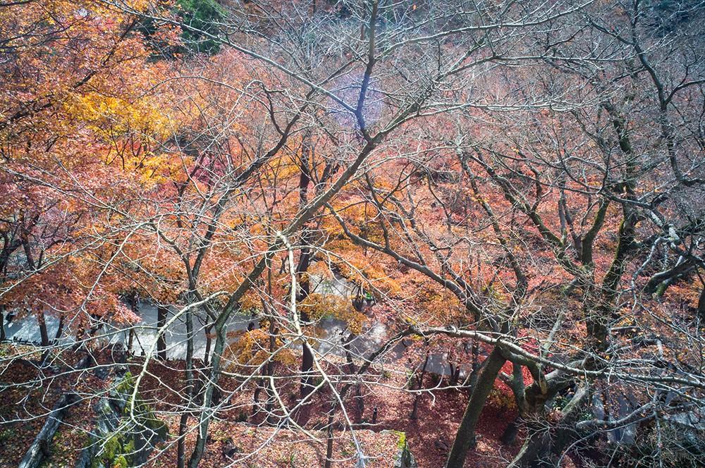 京都 清水寺 RICOH GXR MOUNT A12 LEICA SUPER-ANGULON 21/4