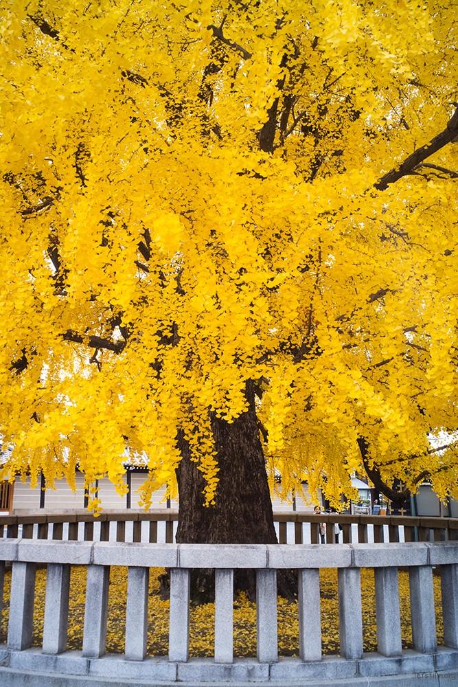 京都 西本願寺 RICOH GXR MOUNT A12 LEICA SUPER-ANGULON 21/4