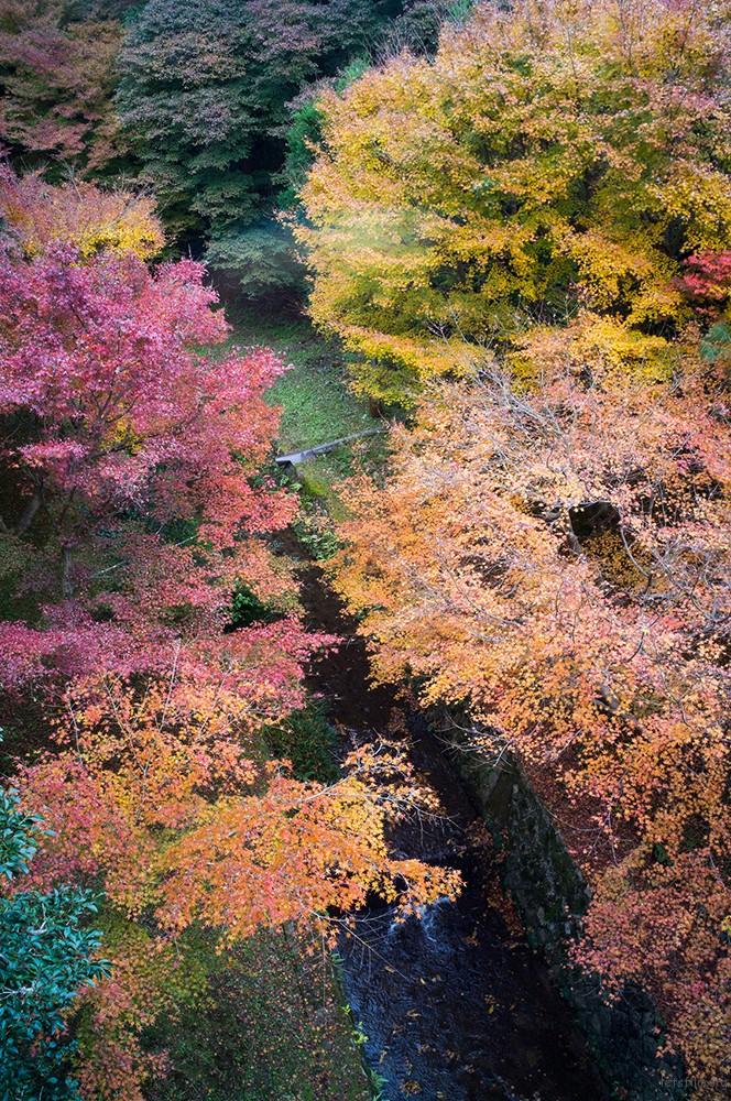 京都 東福寺 RICOH GXR MOUNT A12 LEICA SUPER-ANGULON 21/4