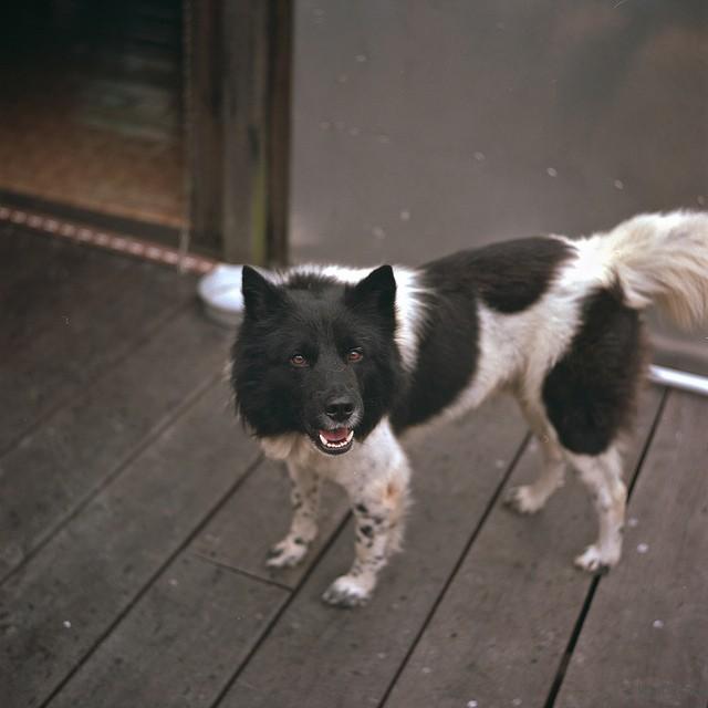 Kodak Portra 160NC