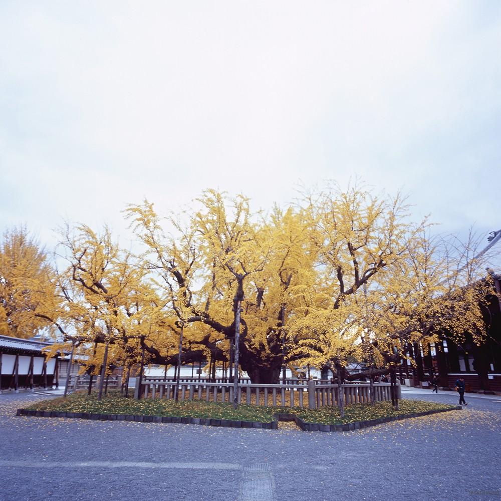 京都 京都御苑 RICOH GXR MOUNT A12 LEICA SUPER-ANGULON 21/4