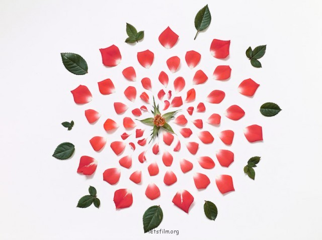 Exploded-Flowers5-640x478
