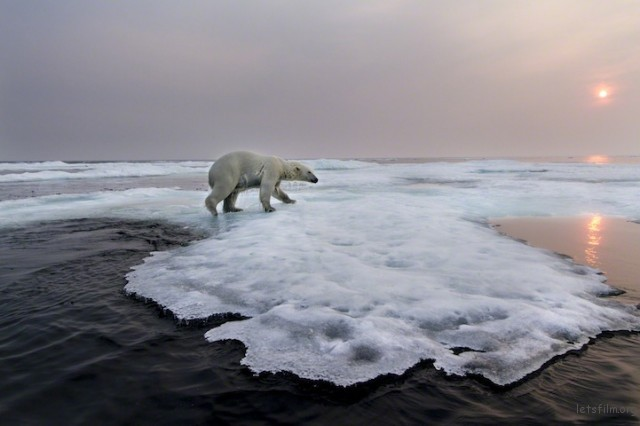 Polar-Bear-Photography6-640x426