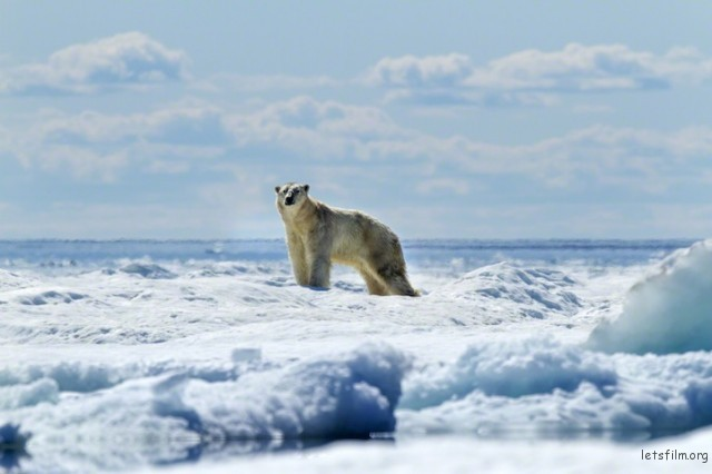 Polar-Bear-Photography7-640x426