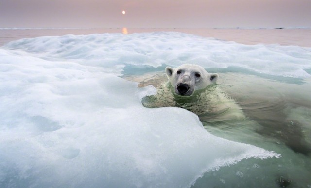 Polar-Bear-Photography9-640x387