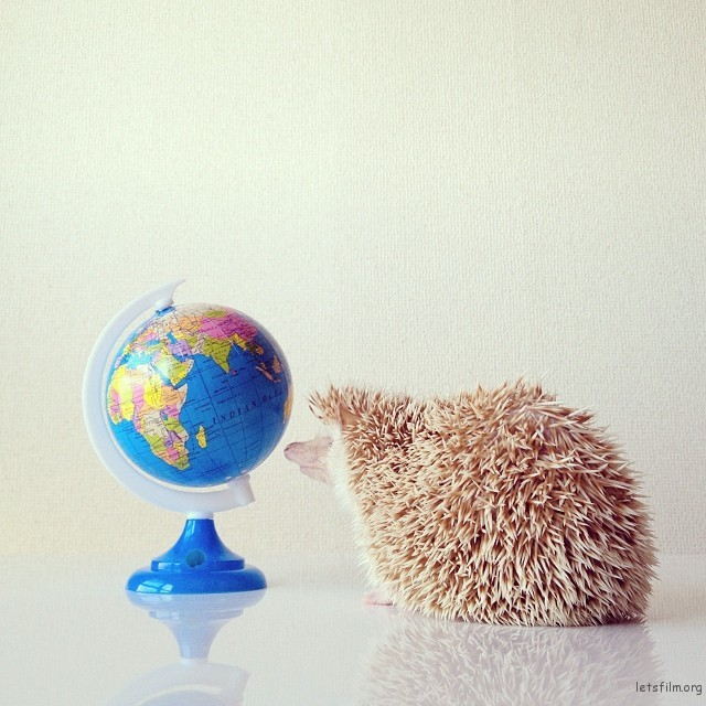 darcytheflyinghedgehog4