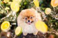 可爱松鼠狗 Flint 令人融化的照片