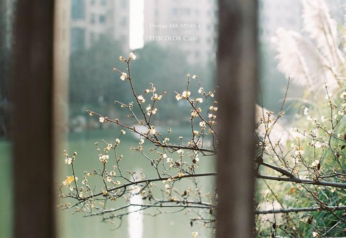 暖冬(3)