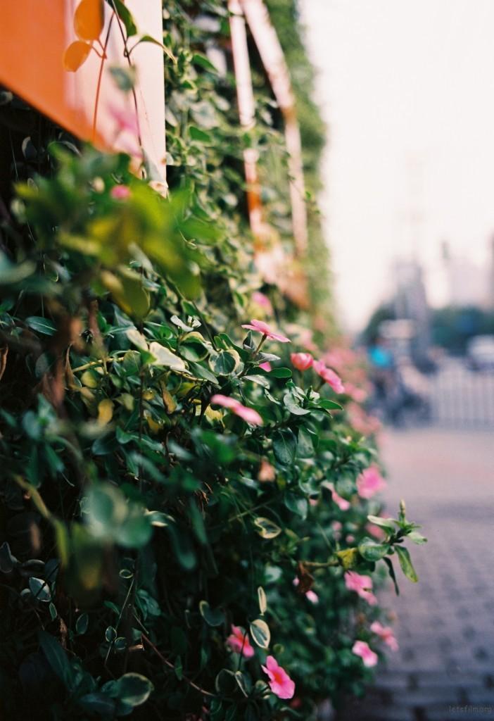 穿过新天地,来到复兴路,这里充满了浓浓的法国情调,十号线新天地站边上的一小片花圃,只觉得它很安静,在这座喧嚣的城市里安静的存在。