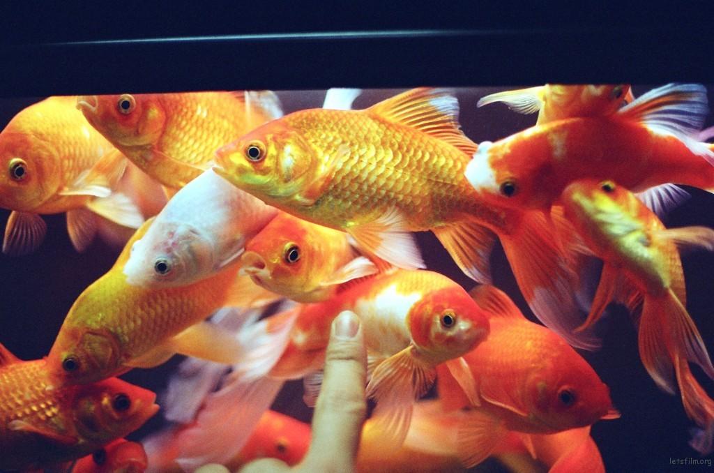 丫头公司的鱼缸