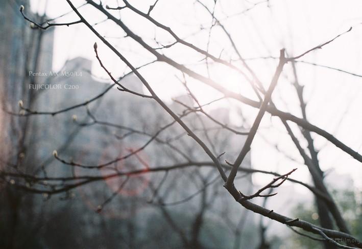 暖冬(2)