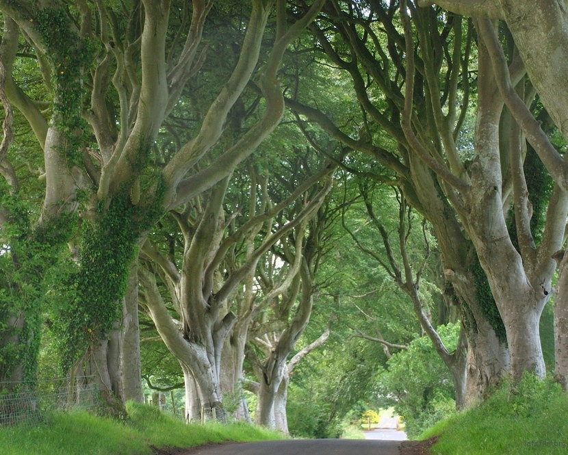 8739756554_dark-hedges07