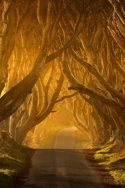 8739756554_dark-hedges08