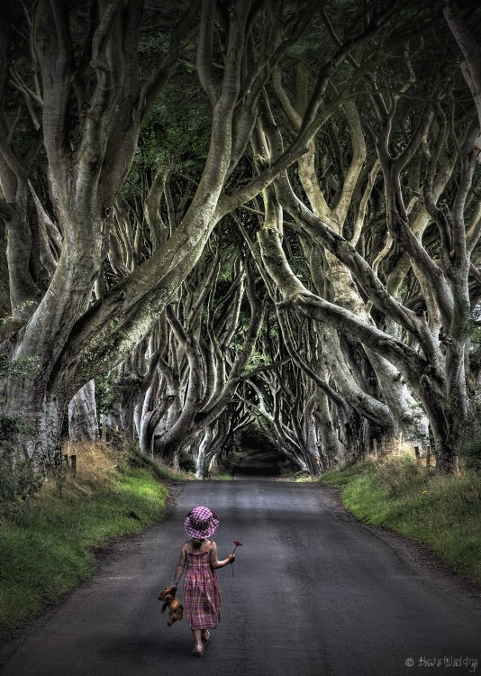 8739756554_dark-hedges09