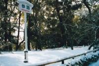 投稿作品No.1108 2014京都初雪