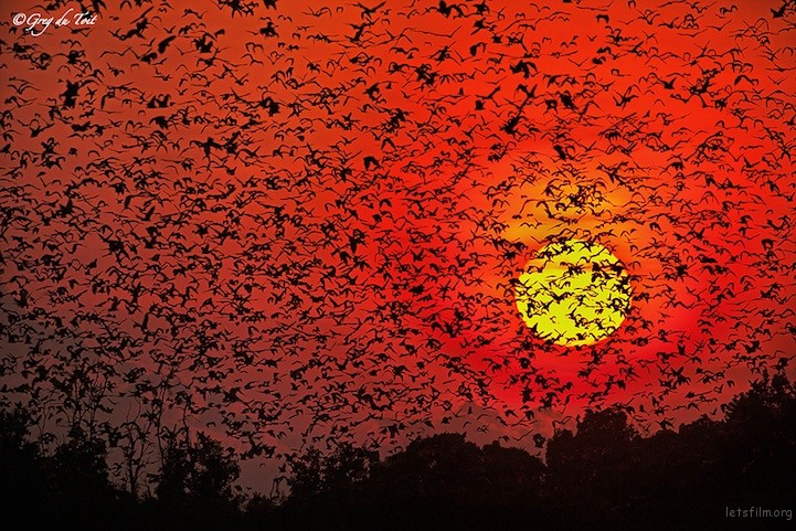 Bats by Greg du Toit