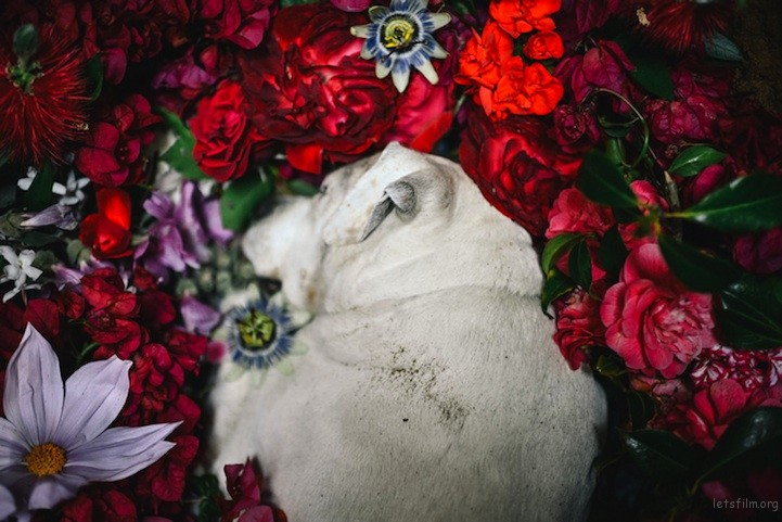 dogburial06