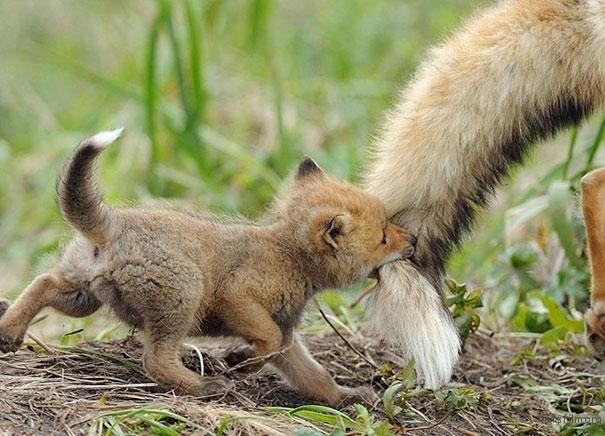 4.我愿意去买一只狐狸尾巴给你咬…