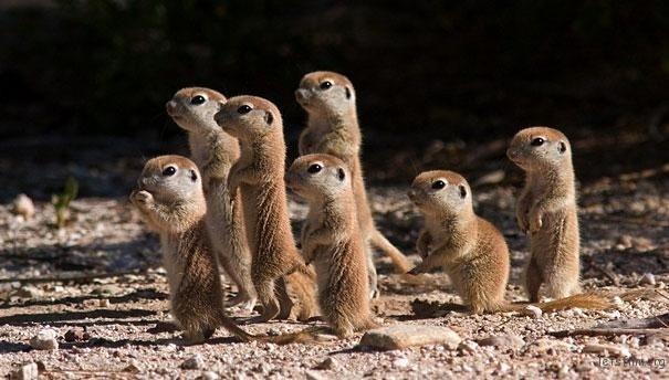 3.谁准你们一群小土拨鼠站在一起的!太萌了吧~