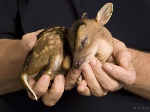 1.超级小的小鹿斑比啊