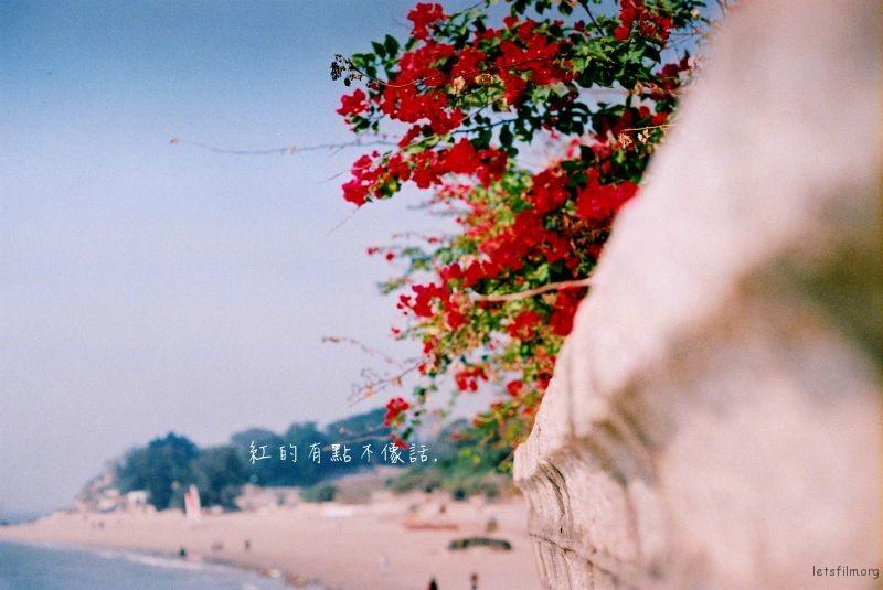 为一道风景,漂洋过海来看你(8)