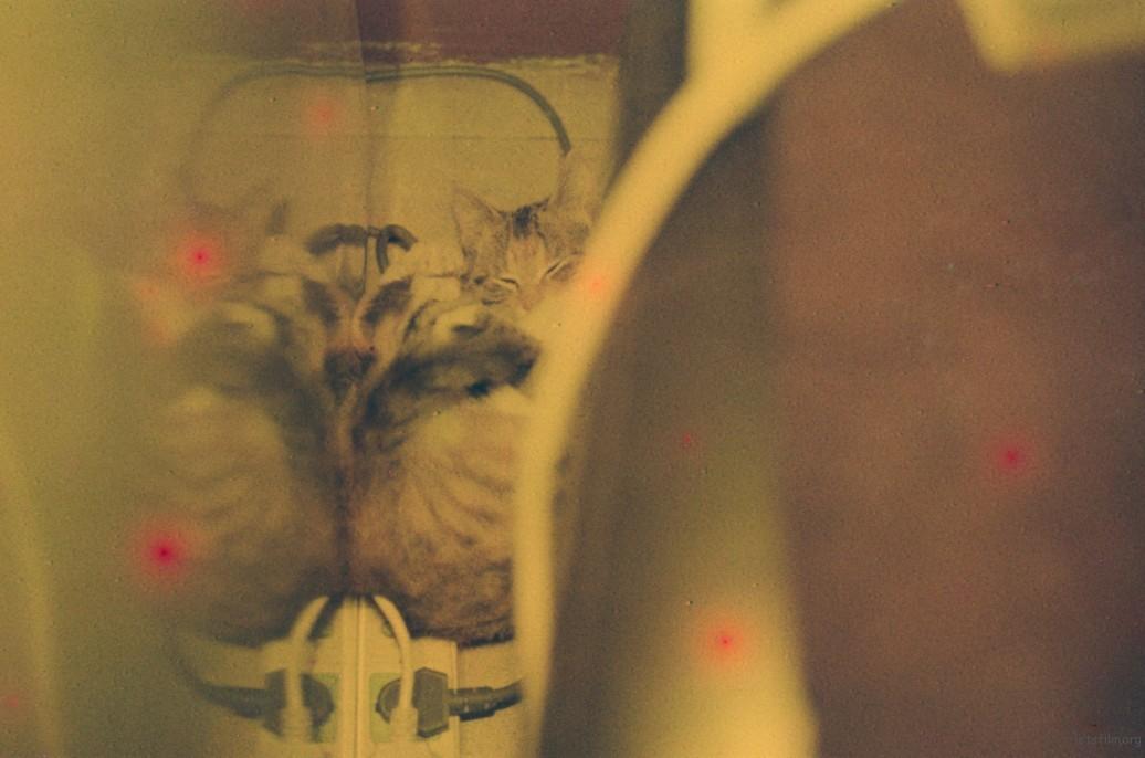 【故事】No.23 小猫海参 | 胶片的味道