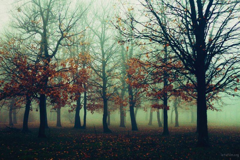 fogggd_by_ineedchemicalx-d71ll65