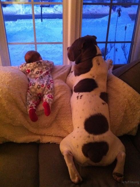 狗狗和小宝宝再一起等爸爸回家!