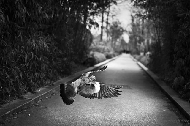 Raphael-Annee-Photography-9