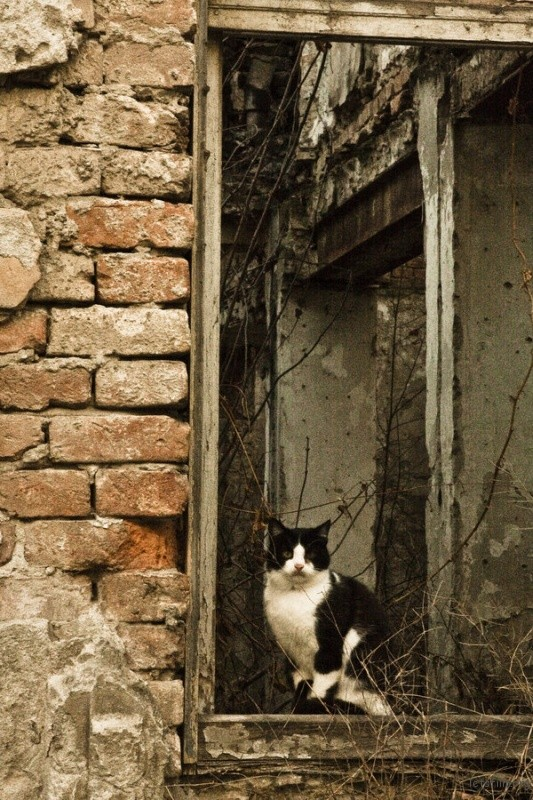 cat_on_the_window_by_anahrv-d4n6bo9