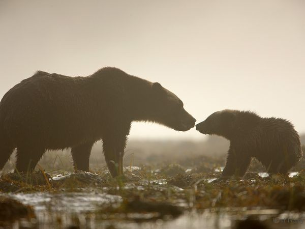 grizzly-bear-greeting_19888_600x450