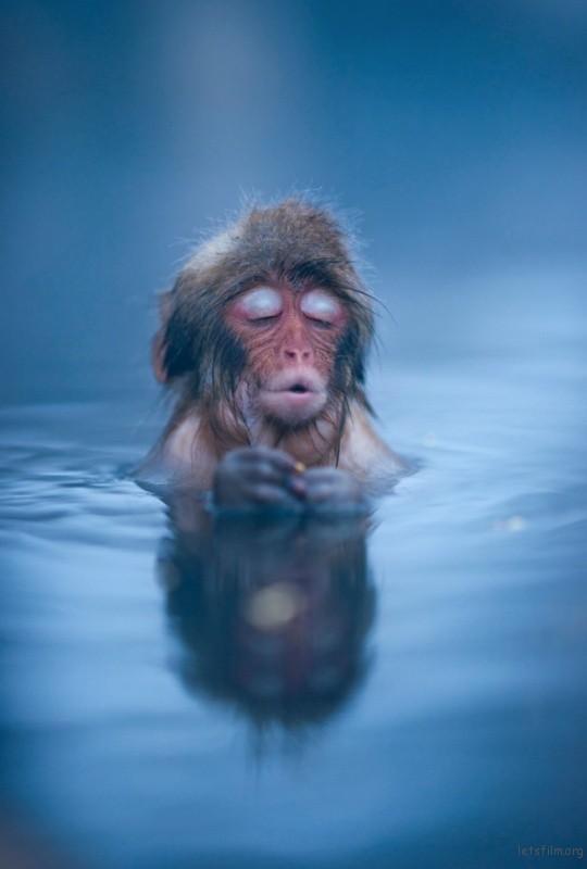 winter_monkey_01