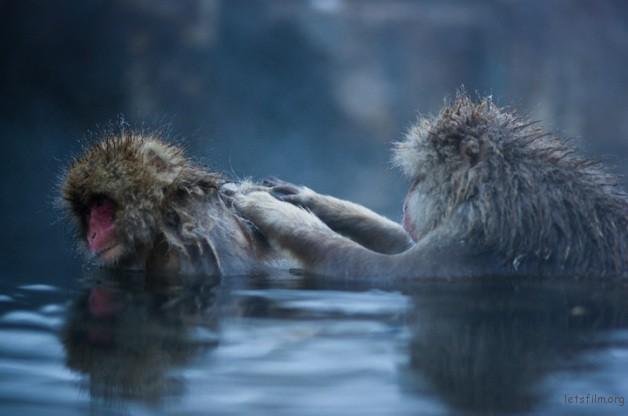 winter_monkey_03