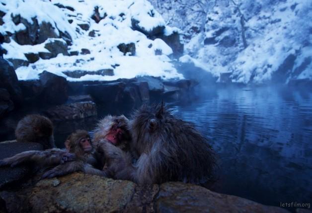 winter_monkey_05