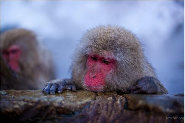 winter_monkey_06