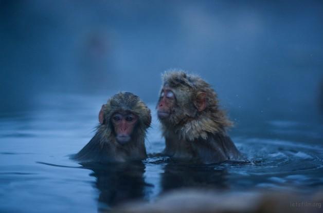 winter_monkey_07