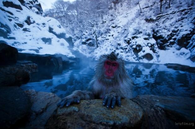 winter_monkey_08