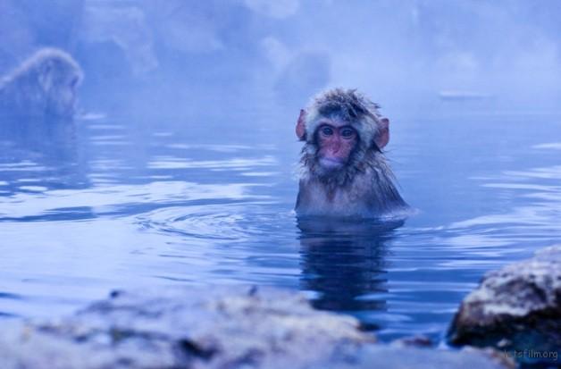 winter_monkey_09