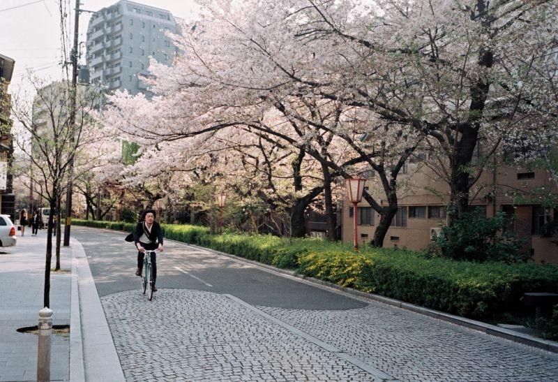 摄于2014年4月,日本京都,木屋町通